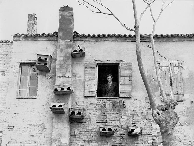 White Pigeon, 1954