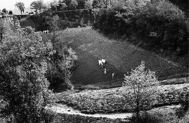 Gargano, 1958