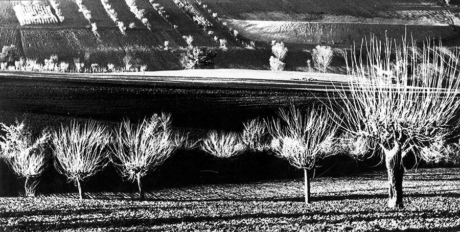 Landscape, 1960 c.