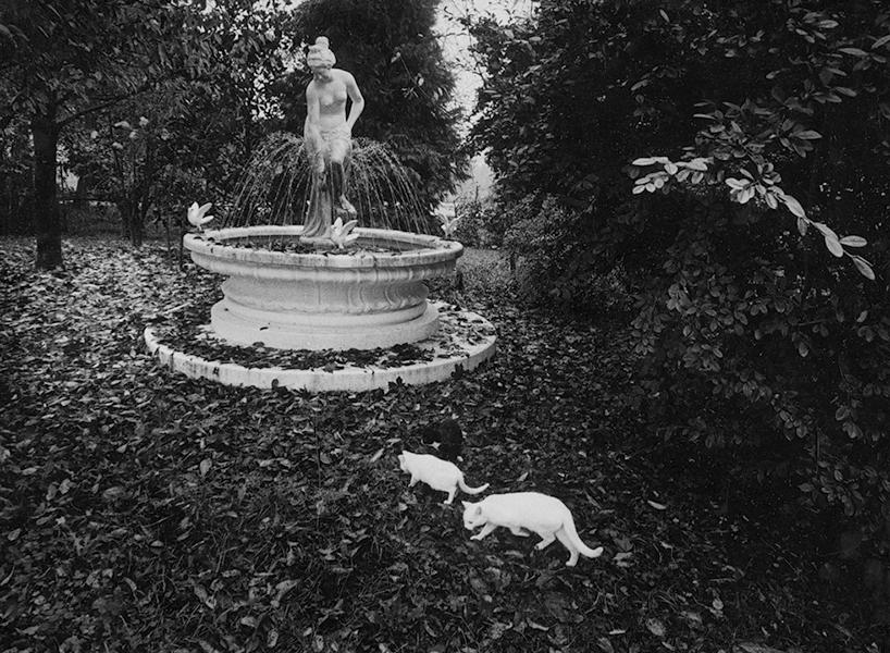 Carmelo's Garden, 2000