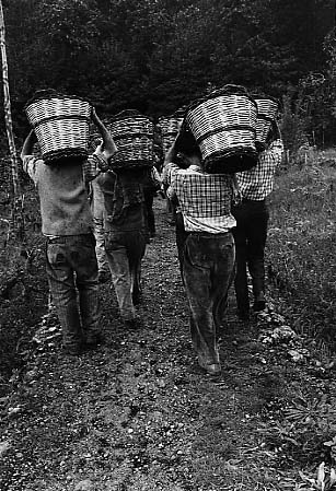 Milo. Vintagers, 1963